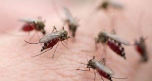 bệnh sốt rét