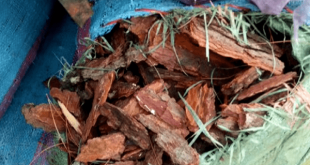 3,5 tấn vỏ thông bị bắt ở Gia Lai