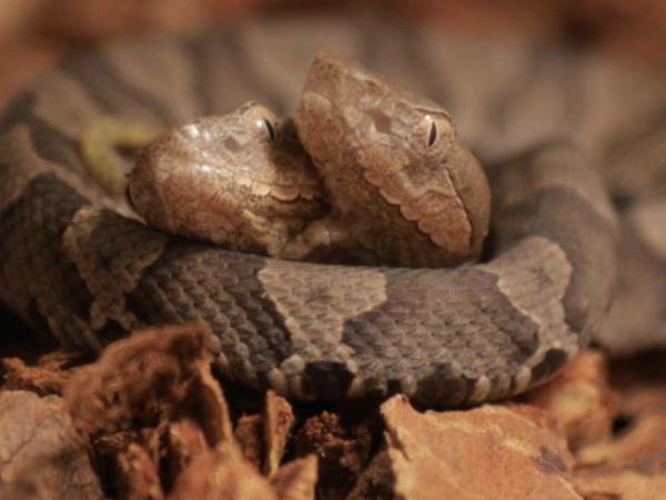 Nằm mơ thấy rắn hai đầu là điềm báo tốt hay xấu