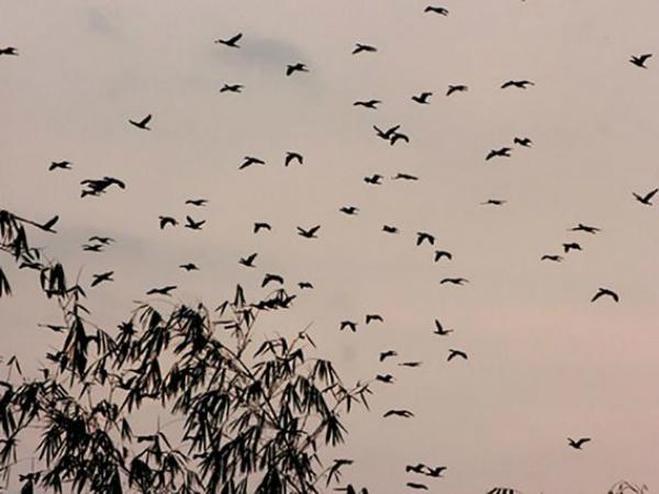 Nằm mộng thấy con chim trời có điềm báo tốt hay xấu?