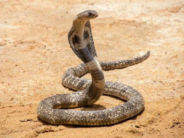 Giải mã ý nghĩa của giấc mơ thấy con rắn
