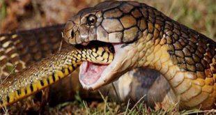 Mơ thấy 2 con rắn là điềm báo gì, đánh con lô nào chuẩn xác?