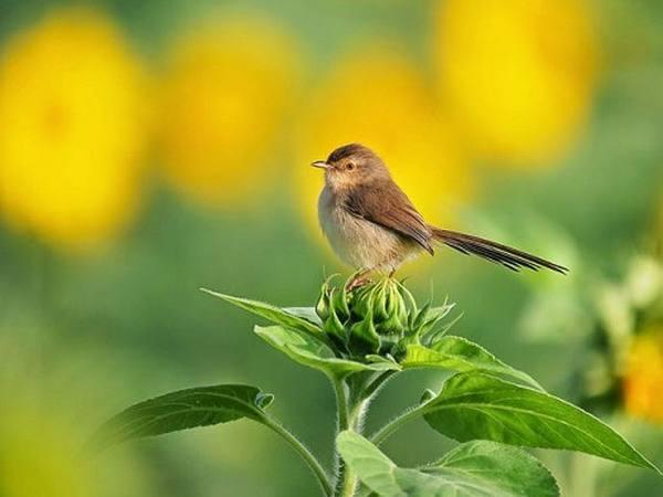 Mơ thấy chim én là điềm báo lành hay dữ?