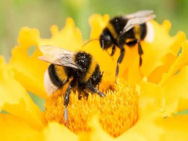 Giải mã ý nghĩa và điềm báo của giấc mơ thấy ong
