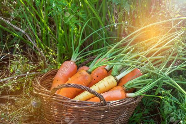 Điềm báo giấc mơ thấy củ cà rốt mang đến là gì