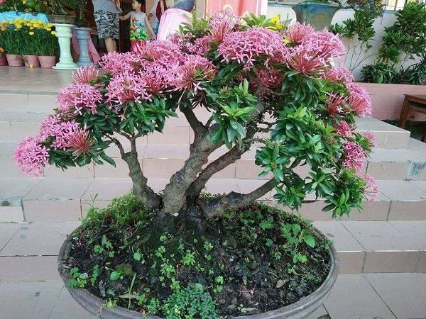 Nằm mơ thấy cây nở hoa có ý nghĩa gì trong cuộc sống