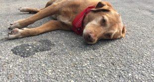Nằm mơ thấy chó chết có điềm báo gì, đánh con gì dễ trúng